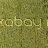 pixabay 592256 1280 160x160 - Lež, vlastnosti lži